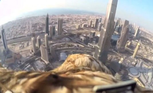 VÍDEO: Águila capta increíbles imágenes de Dubai
