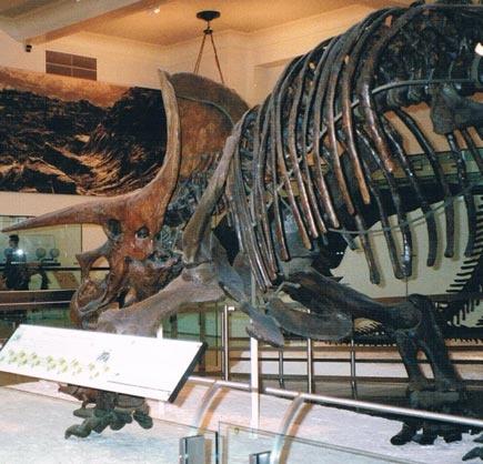 Bc Natural History Museum
