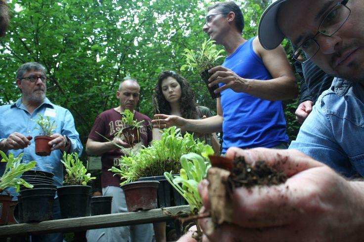Un taller de productos ecológicos fue la actividad en la que participaron los clientes, emprendedores y empleados de Triodos Bank que vivieron la jornada de la Fiesta de la banca con valores en el proyecto de Ambientea.