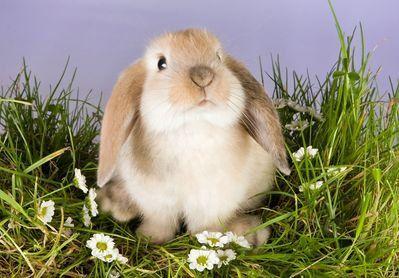 <3 Voici quelques Informations Utiles pour bien prendre soin d'un lapin nain bélier : 1* Le nom Vous rêvez que votre lapin arrive vers vous en sautillant lorsque vous l'appelez ? C'est ...