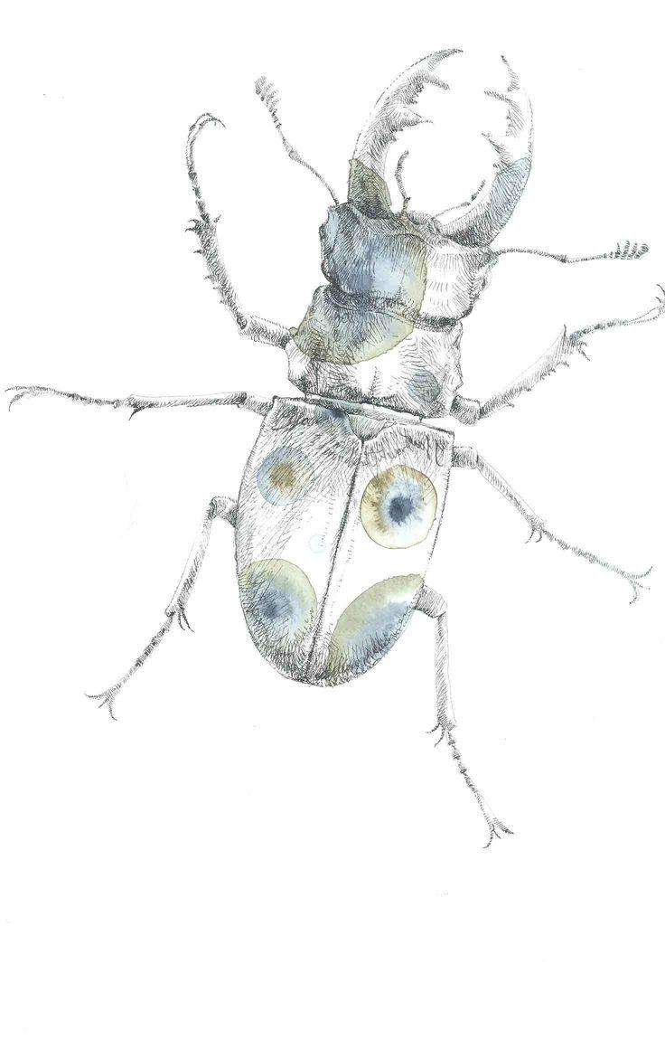 disegno di Luca Fracasso -cervo volante