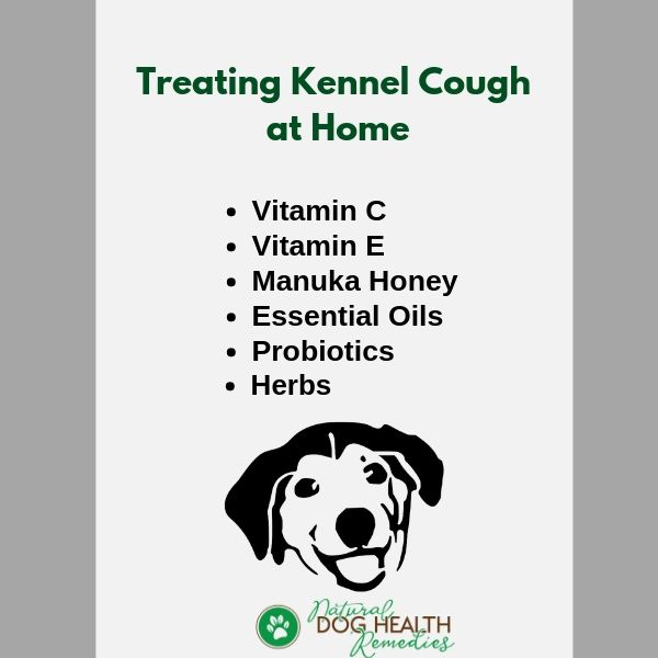 How To Treat Kennel Cough At Home Dog Coughing Dog Cough Remedies Cough