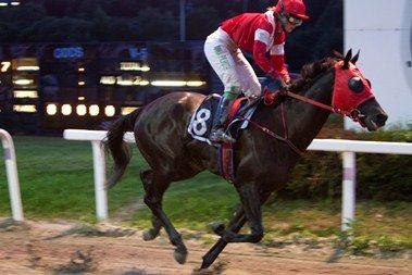 """Vortex vil alltid være """"lillegutt"""" og det er flott å se at han nevnes som en av de mest spennende hestene på Øvrevoll"""