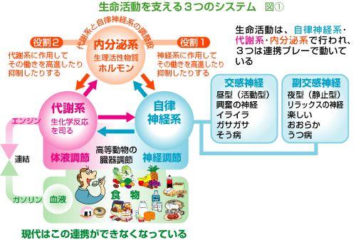 一喝説法 生命活動は、自律神経系・代謝系・内分泌系で行われ、この3つは連携プレーで動いています。