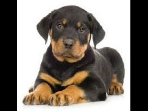 75% Commission - Dog Breeding Secrets - Learn To Breed Your Dog