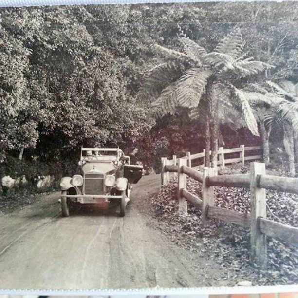 Tourists stop to enjoy the view from Bulli Pass, NSW in 1928. Lovely tree ferns.
