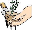 Utiliser le compost : comment faire ?