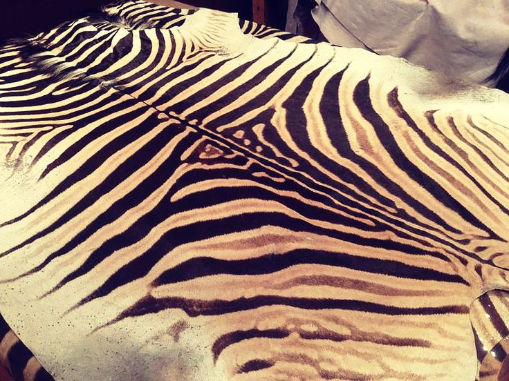 The Best Zebra Skin Rug Cleaning Agents for Various Stains. Zebra skin rug $1750 shop now. #ZebraSkinRug, #ZebraSkin, #Zebra #Rug #interiordesign #interiordecor #interiors #interiortips