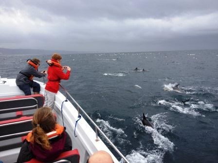Dolphins and Birds, Knysna boat trips,