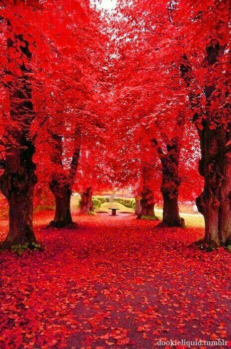 Imagen de red, autumn, and tree