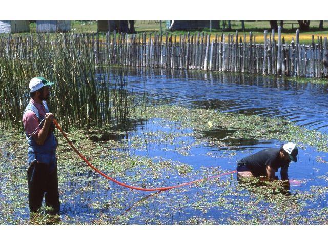 Nuestra Primera Camara Submarina filmando en laguna El Peral cerca de El Tabo en Litoral Central. El invento fue creado por Victor Segura con un basurero, fibra de vidrio y una manguera de jardin por la que pasaba el cable de video hasta el grabador de 3/4 Sony 4.800 UMatic