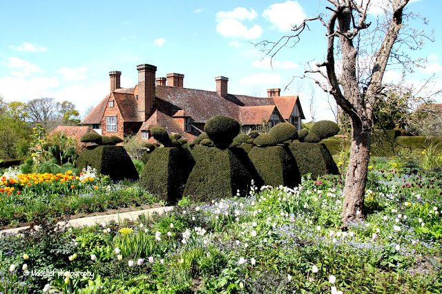 Madelief - Great Dixter house and gardens