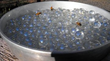 """Make a """"Bee Bath"""" to Help Hydrate Our Invaluable Pollinators"""