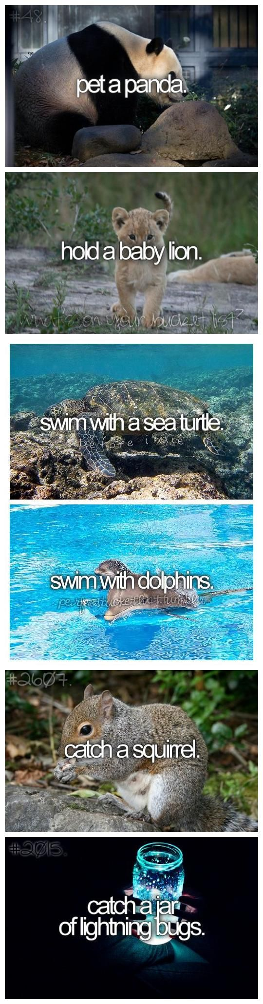 Before I die... Done with swim with and sea turtle & jar of lightning bugs