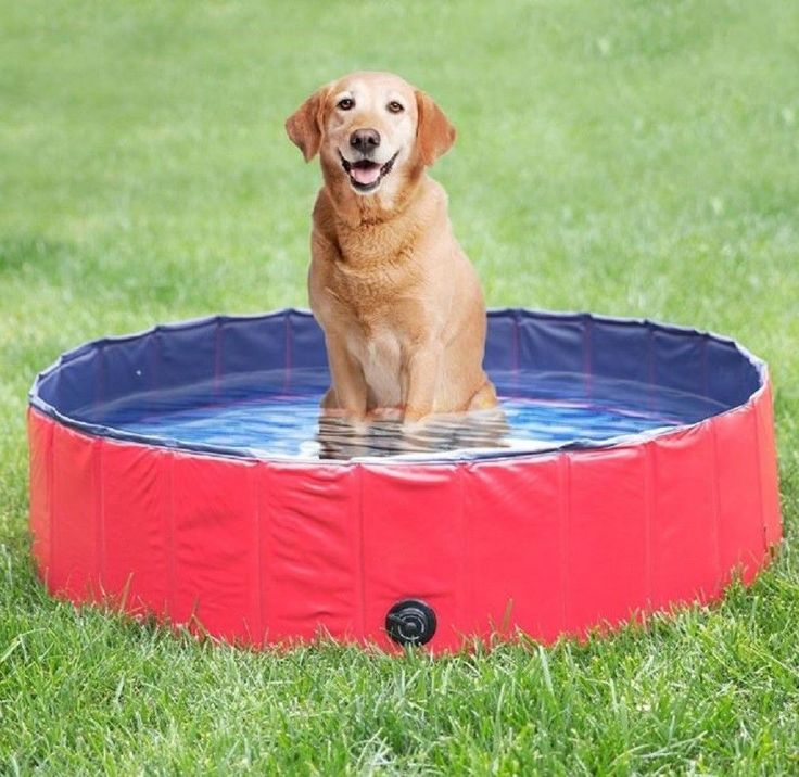 Pet Bath Tub Dog Swimming Pool Foldable Portable Wash Bathe Indoor Outdoor NEW #Unbranded
