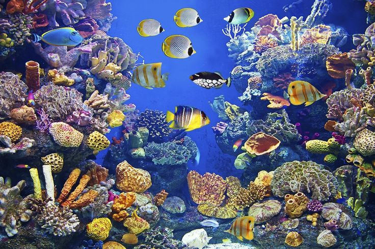 The hidden health benefits of aquariums and fish tanks http://buff.ly/2bFQ7By #aquariums #fishtanks #healthbenefits