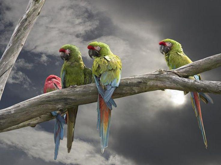 Parrots reunion