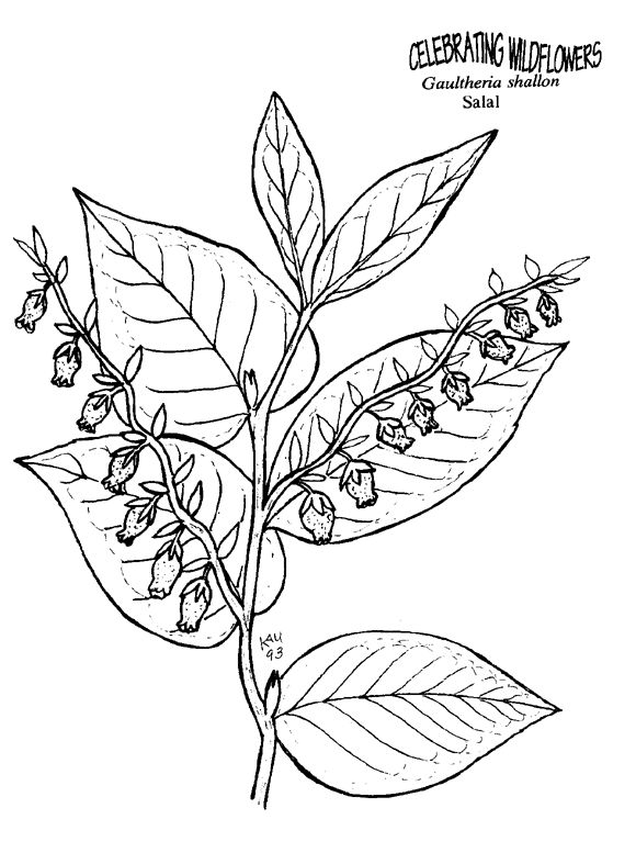 1000 images about color my world on pinterest coloring for Wildflower coloring pages