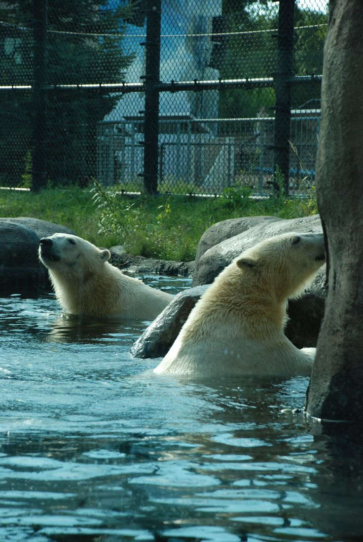 Happy 2nd Birthday to Suka and Sakari!  Please join us in wishing these two new additions a Happy Birthday!