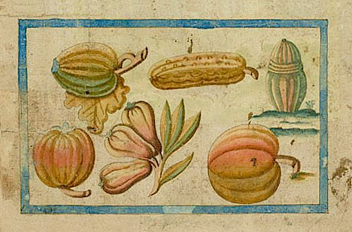 Melons and squash. Plate 45 of the Brief Discours… | Courtesy of the John Carter Brown Library at Brown University