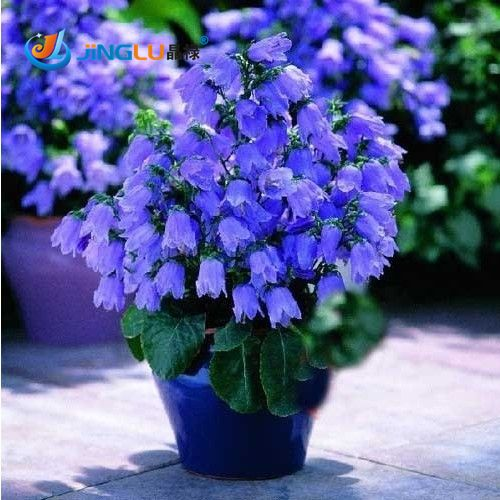 Cheap seed paddy, Buy Quality seed chest directly from China seed potato Suppliers:   [xlmodel]-[products]-[33727]     You Will Like ...               50 Pcs / Bag Plants Potted Lily Flower Seeds Flower S