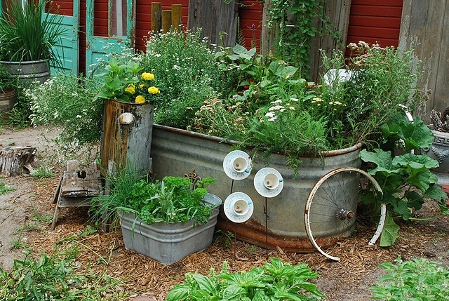 galvanized tubs great for water gardens too,