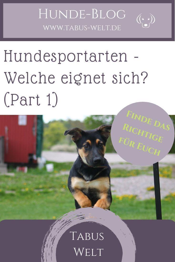Pin auf Fitness & Gesundheit für Hunde