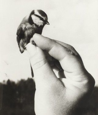 : Animals, Hands, Little Birds, White, Things, Photography, Black