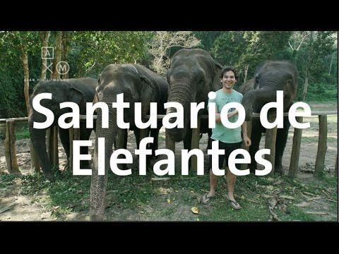 Santuario de elefantes | Tailandia #2