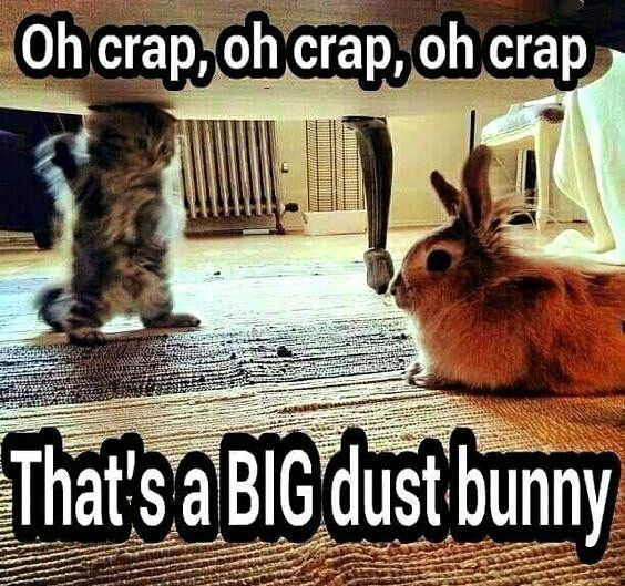 Wow! That IS a big dust bunny! #rabbit #bunny #bunnies #pets #cuteanimals