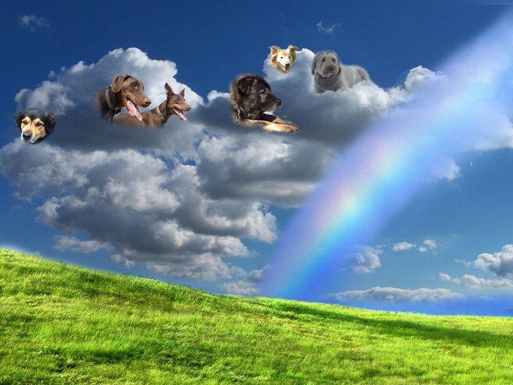 Rainbowbridge                                                                                                                                                                                 Mehr