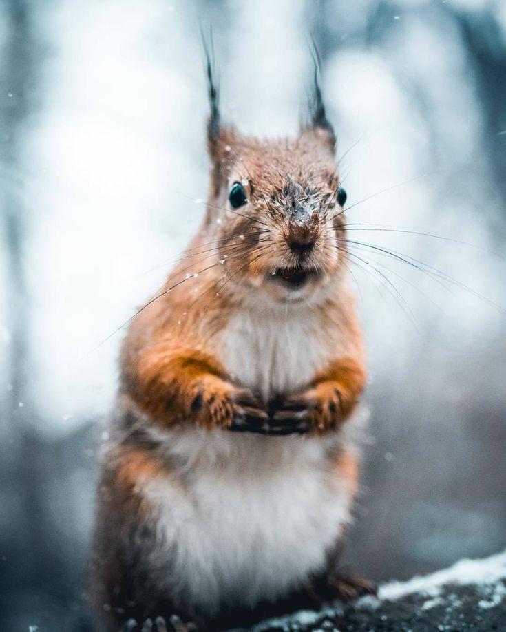 556 besten Squirrel Bilder auf Pinterest   Eichhörnchen ...