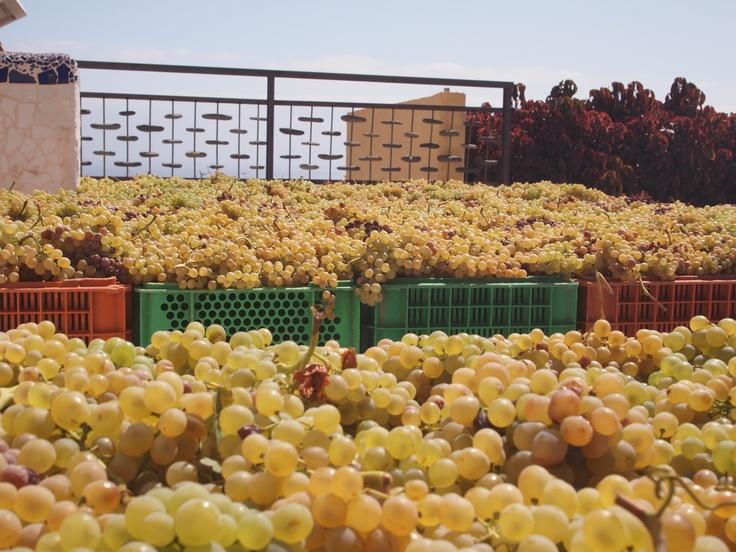 Soleado de la #Malvasia para el #Contiempo Malvasía Dulce #vino