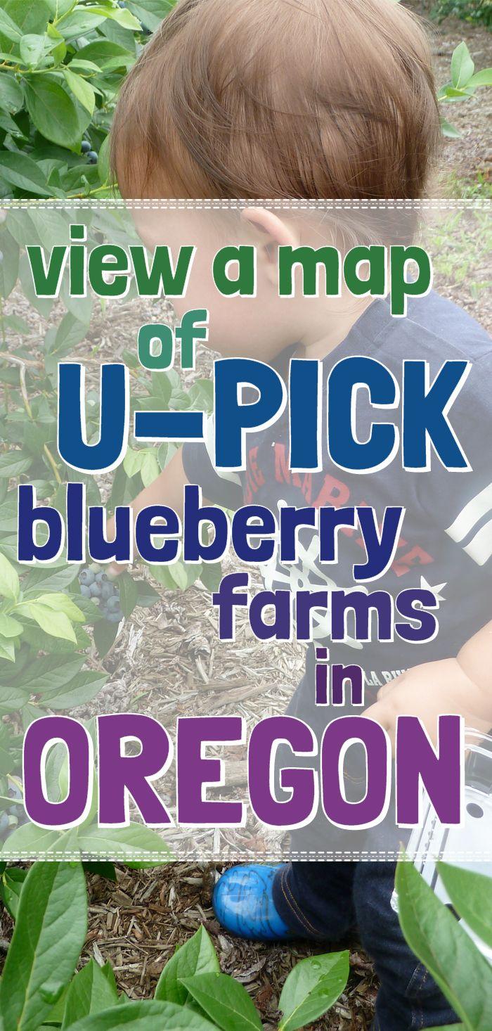 Blueberry Farm Salem Oregon Punching Bag Blueberries