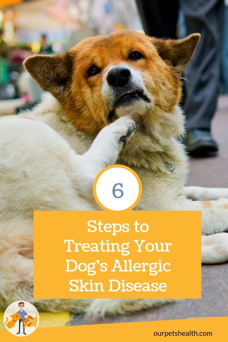 Dog Skin Allergies Beat The Itch In 6 Simple Steps There S Little Worse Than Having A Dog Who S Scratching All Th Dog Skin Allergies Dog Skin Skin Allergies