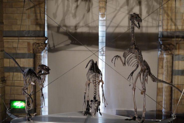 Velociraptors  - Natural History Museum