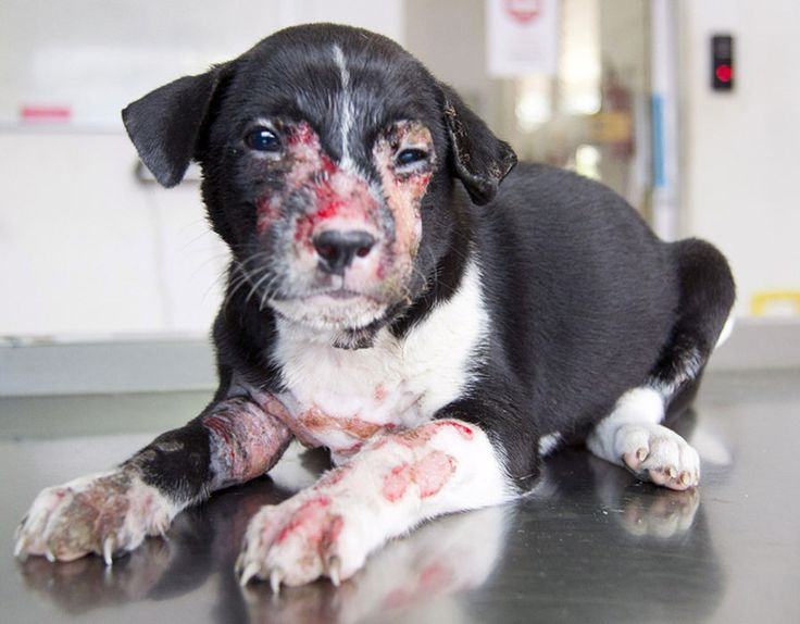 GRAPHIC CONTENT: Worst cases of animal cruelty | Police ...