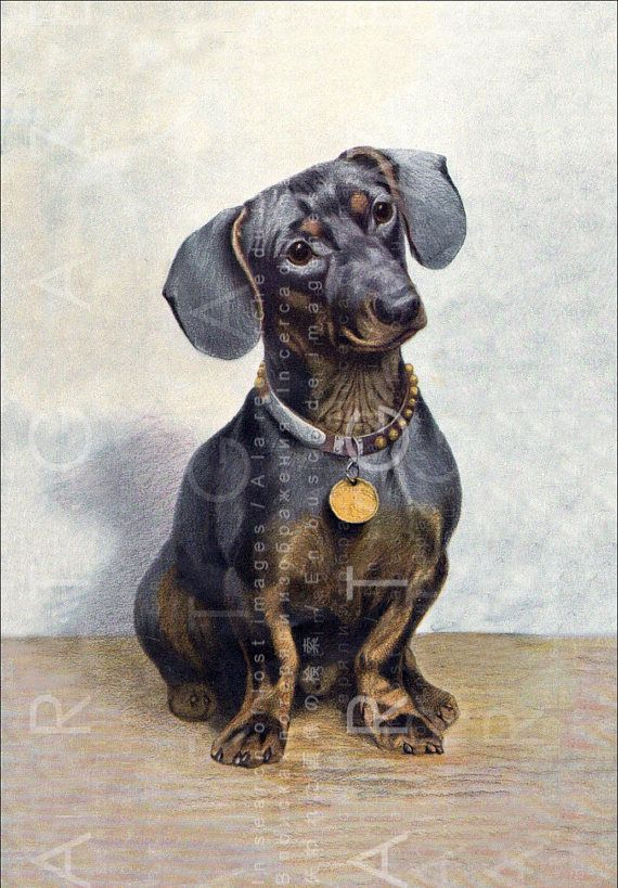 Adorable Dachshund Dog A 1900s German Watercolor Illustration