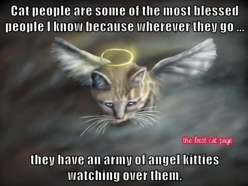 Cat people are some of the most blessed people I know because wherever they go...they have an army of angel kitties watching over them...