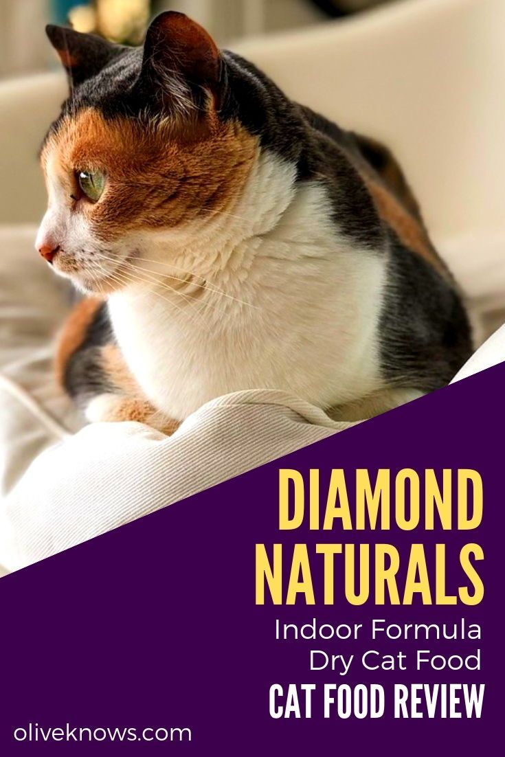 Diamond Naturals Indoor Formula Dry Cat Food Review Oliveknows Cat Food Reviews Dry Cat Food Cat Food