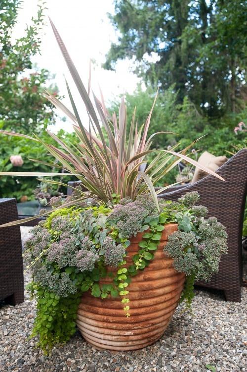 Great mix: Landscape Garden Inspiration, Backyard Ideas, Outdoor Ideas, Garden Ideas, Secret Garden, Gardening Ideas, Photo