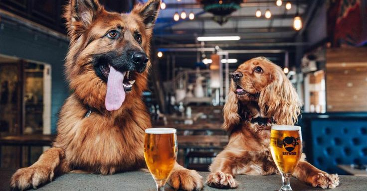 Una empresa cervecera da permiso a sus empleados para ausentarse hasta por una semana para cuidar de cachorros o perros adoptados que lleguen a sus hogares.