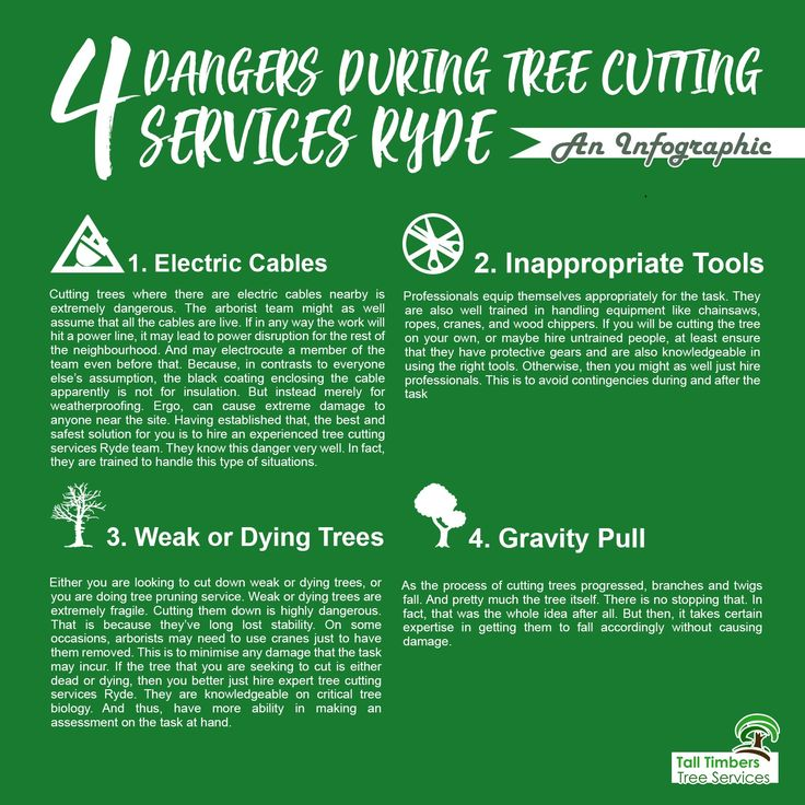 Four dangers during tree cutting services Ryde! Click here ↓ https://talltimberstreeservices.com.au/