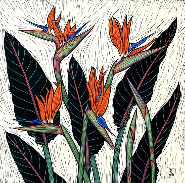 Linocuts by artist Rachel Newling of exotic flowers: Tropical Ginger,  Frangipani, Hibiscus, Strelitzia, Torch ginger, Heliconia, Oriental Lily,  Iris, Coral tree, cactus flower & Tulip.Linocuts are for saleas limited  edition prints