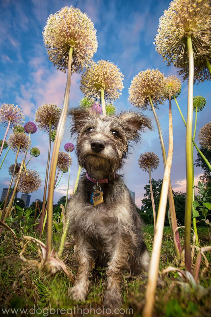 best Pet Photography images on Pinterest