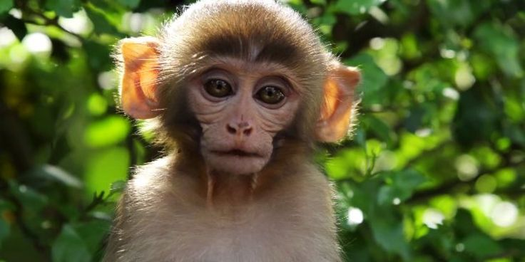 "World traveler and videographer Devin Graham has captured stunning footage of monkeys living at one of the planet's most awe-inspiring religious sites: Nepal's Swayambhunath, also known as ""Monkey Temple."" Located on top o..."