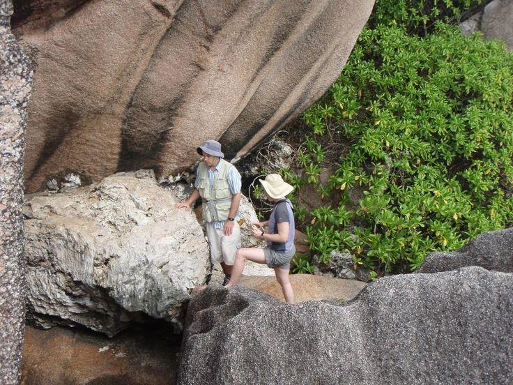 L'étude des coraux fossiles sur les îles des Seychelles renseigne de façon fiable, semble-t-il, sur le niveau des océans durant le quaternaire. Localement, ce niveau peut varier pour de multiples raisons mais la position particulière des Seychelles permet d'y lire le niveau moyen mondial. © Université de Floride