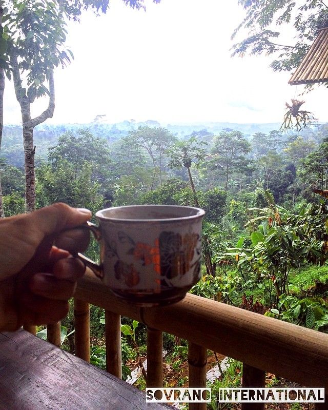#Coffee #Luwak with such an amazing #view. Bali's most expensive #coffee, made by the luwak animal, gotta love it! 👏 #sovranointernational #frenchpress #grinder #kettle #riceterrace #bali