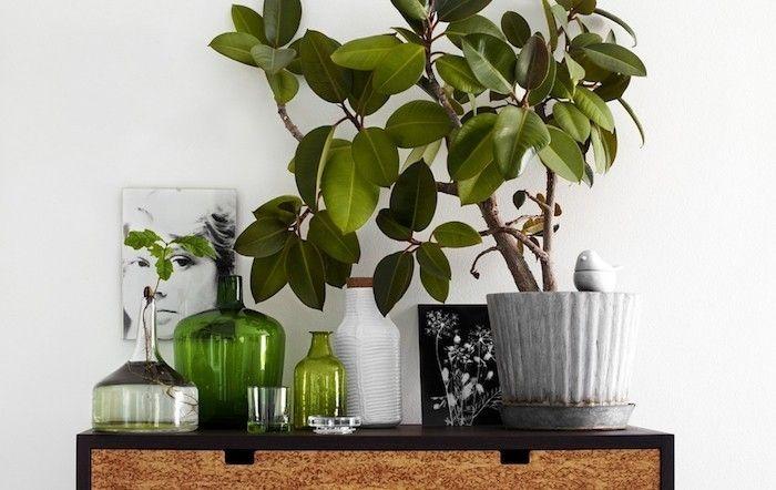 plantes-depolluantes-plante-appartement-interieur-depolluante