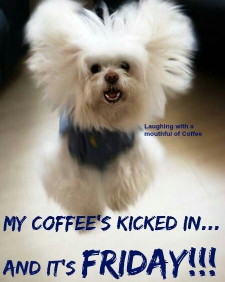 Funny Friday Morning Quotes: Best 25+ Friday Coffee Ideas On Pinterest